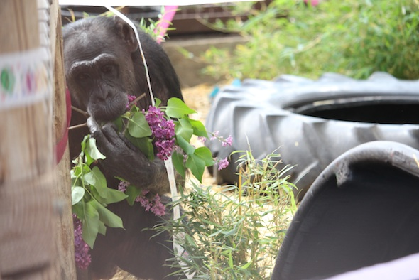 web_Mothers_Day_Jody_birthday_party_lilacs_in_mouth_hands_GH_kh_IMG_2430