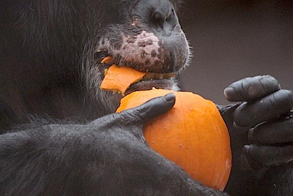 web_Burrito_mouth_eat_pumpkin_birthday_halloween_party_gh_aw_IMG_0244