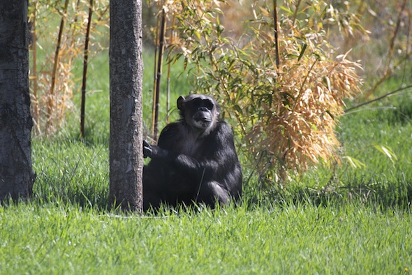 web_Negra_sit_green_grass_bamboo_look_out_YH_kh_IMG_0689