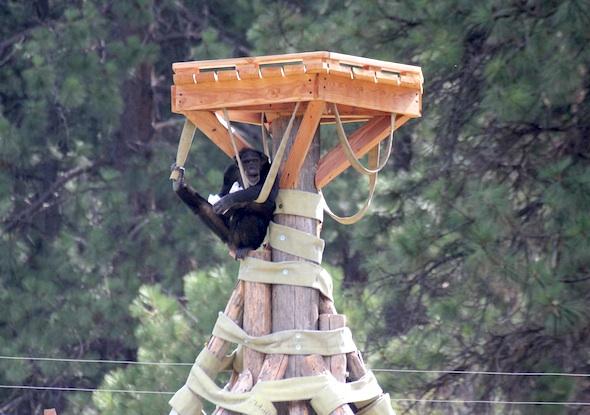web_jamie_foot_in_hose_crows_nest_kd_IMG_4709