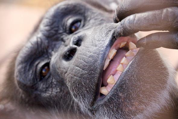 web_annie_play_with_teeth_look_camera_kd_IMG_6566