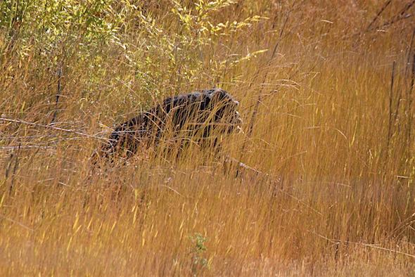 jody_walk_through_grass_carry_cattails_kd_img_7232