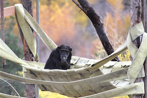 Annie sitting in new hammock