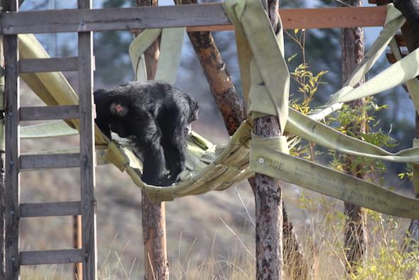 Burrito checking out hammock