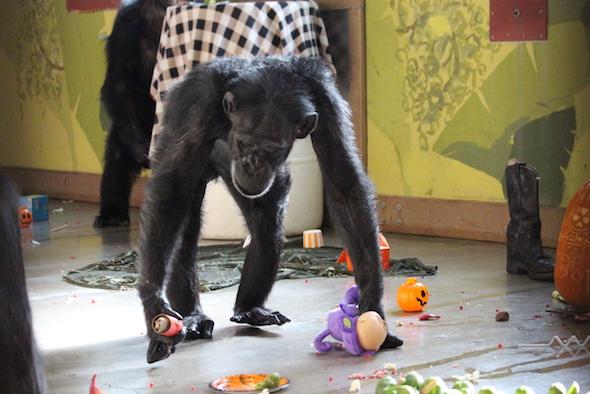 web_foxie_halloween_birthday_party_pr_kd_img_8915-copy