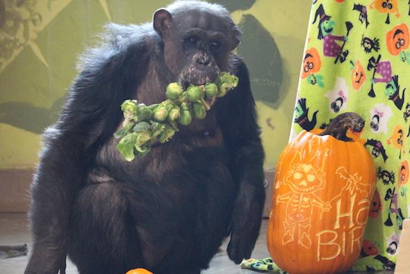 web_negra_halloween_birthday_party_pr_kd_img_8971-copy
