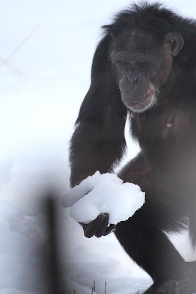 jamie carry snow