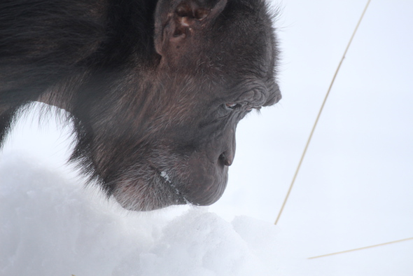 jody eating snow