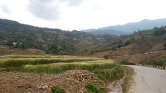 Terraced Wheat Fields