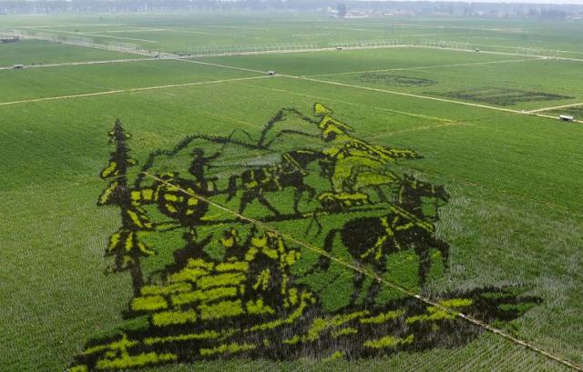 Risultati immagini per dipinto tridimensionale sulla risaia