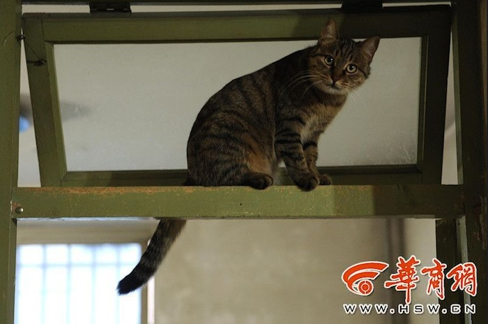gatti randagi in Cina