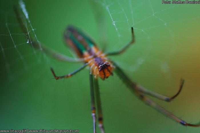 bugs-bigtitle