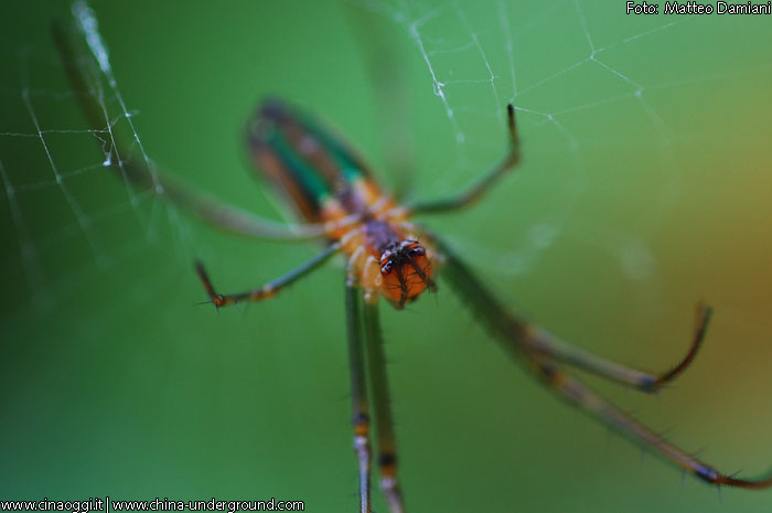 Images of Chinese insects
