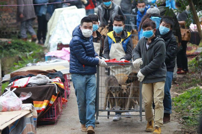 1300 dogs rescued by Chinese volunteers