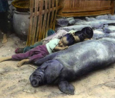 kids-with-pigs-title