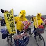 chinese-elderly-016