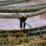 Yuanyang rice-paddy terracing images and video Yunnan China