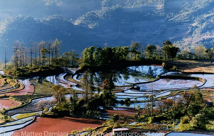Yuanyang rice paddy field