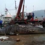 Whale-shark-Hangzhou-Zhejiang