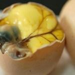 Alive duck embryos