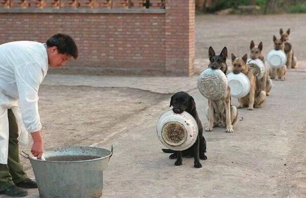 Police dogs waiting for dinner