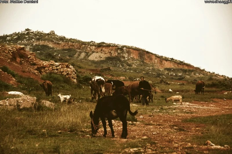 horses-mountain