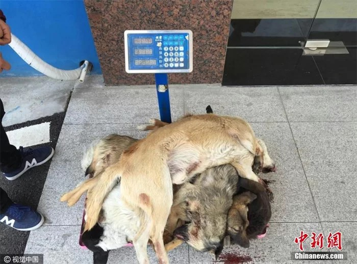 Two men with crossbows killed over 100 dogs in Jiangsu
