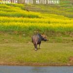 Luoping Yunnan China