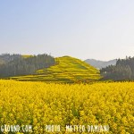 Rapeseeds Fields of Luoping, Yunnan, China