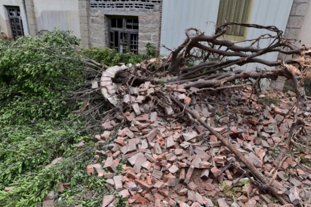 An uprooted tree is seen at a factory before Typhoon Meranti makes a landfall on southeastern China, in Quanzhou, Fujian province, China, September 14, 2016. Picture taken September 14, 2016. REUTERS/Stringer