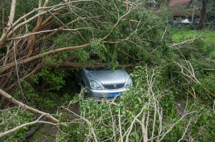 A car is seen under toppled trees after Typhoon Meranti swept through Xiamen, Fujian province, China, September 15, 2016. REUTERS/Stringer