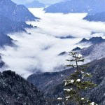 Images of the Most Spectacular Forest of China: Shennongjia
