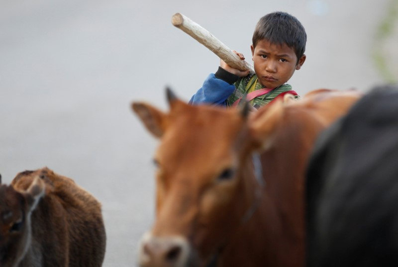 A man kills a water buffalo to eat during a festival in a village outside Pansang, Wa territory in northeast Myanmar