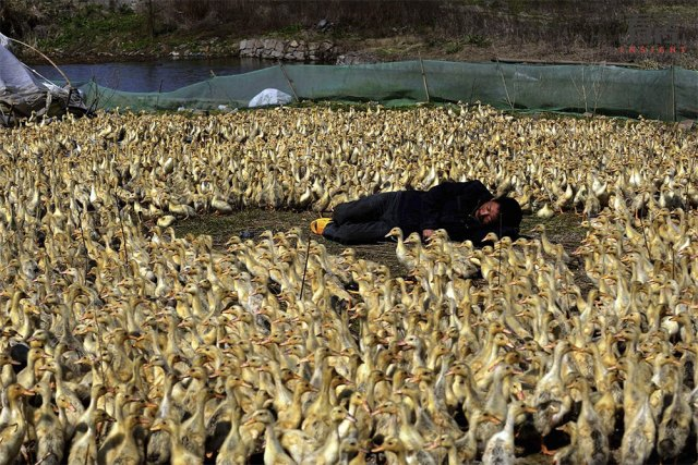 30 surreal images of Chinese sleep anywhere