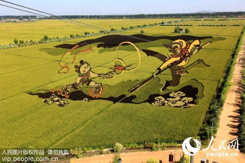 3d-rice-paddy-field-art-Shenyang