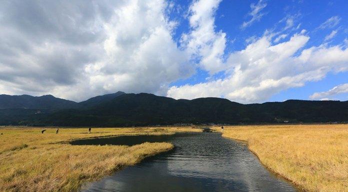 Beihai-wetland-baoshan