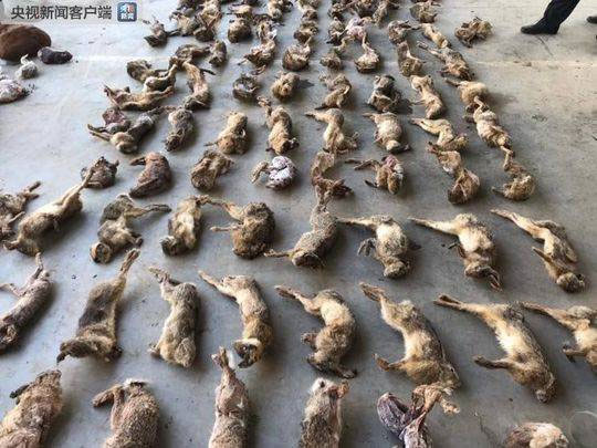 China-cracked-down-largest-Wildlife-trafficking-to-date-001