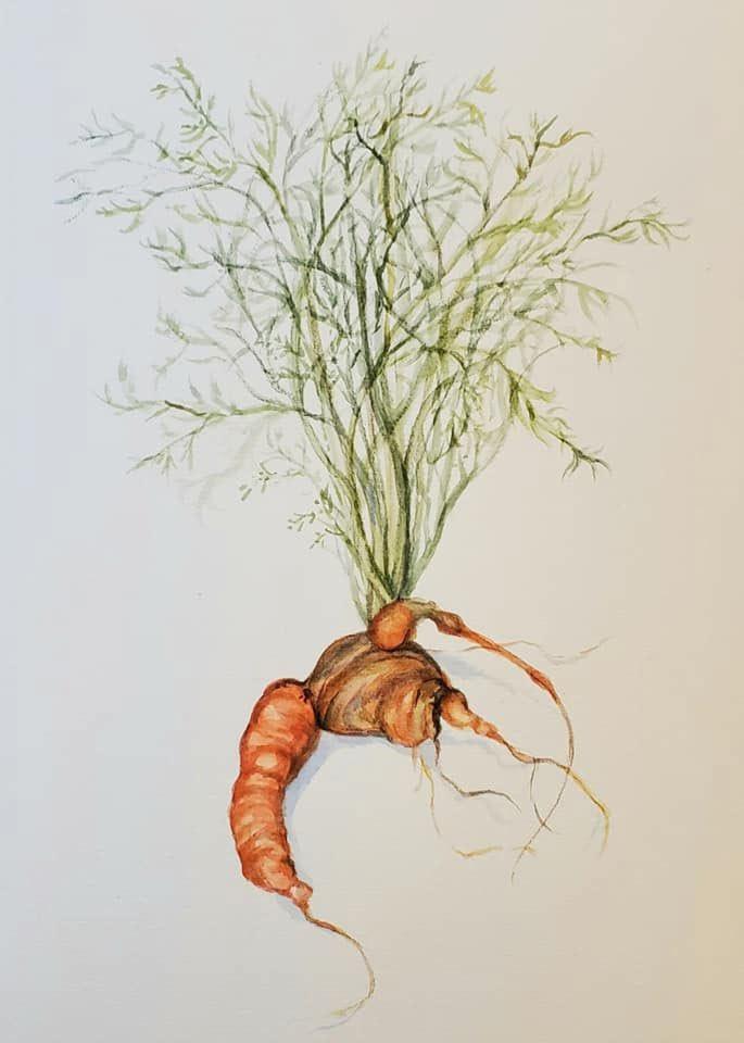 Cindy-Shih_carrot