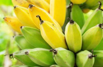 快报:巴拿马水果出口致多国