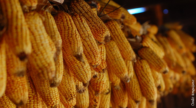 Ukraine tensions flag risks for Beijing's grain importers