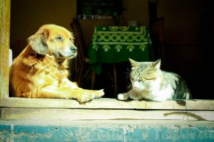 A cat and dog in enjoy the sun in China.