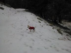Ozy Likes Snow