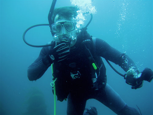 Catalina Diving