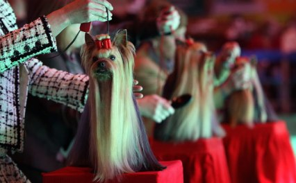 expositions canine de beauté