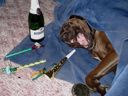 drunk-dog