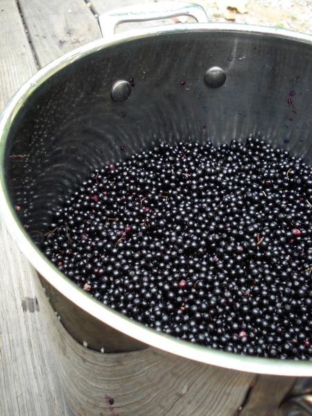 eldeberries