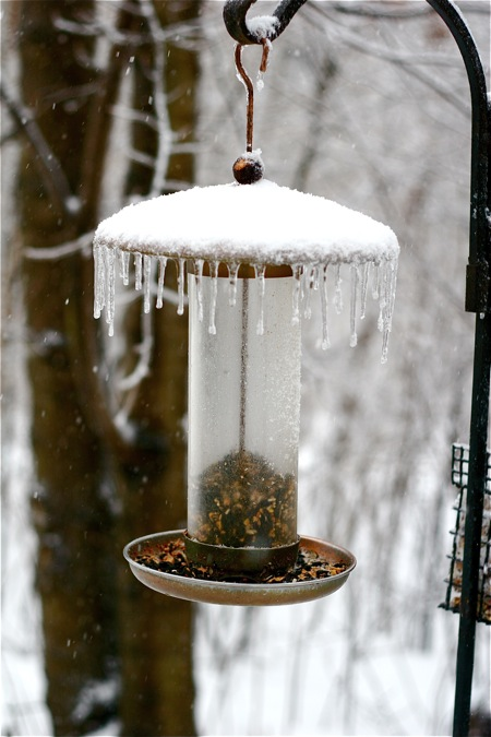 bird-feeder-in-ice