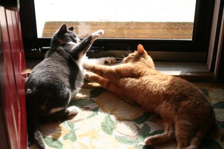 cats-3