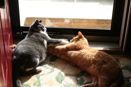 cats-4