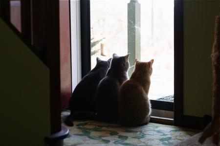 three-cats-in-the-doorway